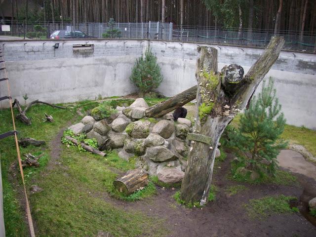Wybieg niedźwiedzia himalajskiego - Zoo Człuchów (widok od południa)