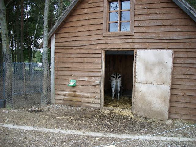 Chatka zebr