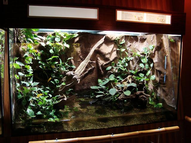 Akwarium nerodii