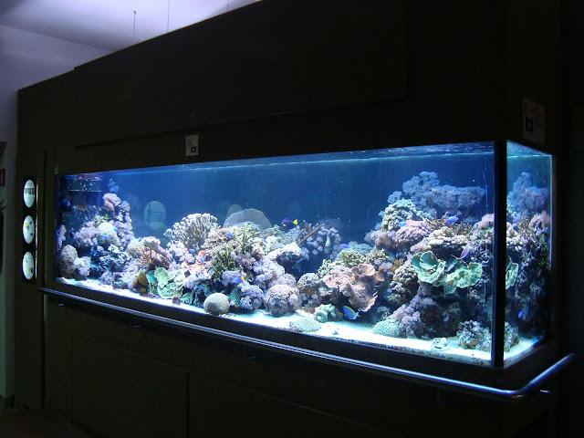 Rafa koralowa - akwarium nr 21