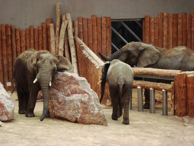 Tercet słoniowy