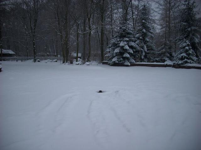 Basen fok w śnieżnej scenerii