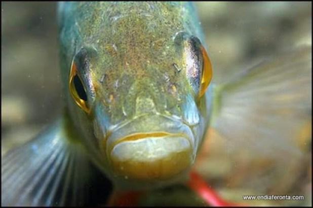 fish-faces11.jpg