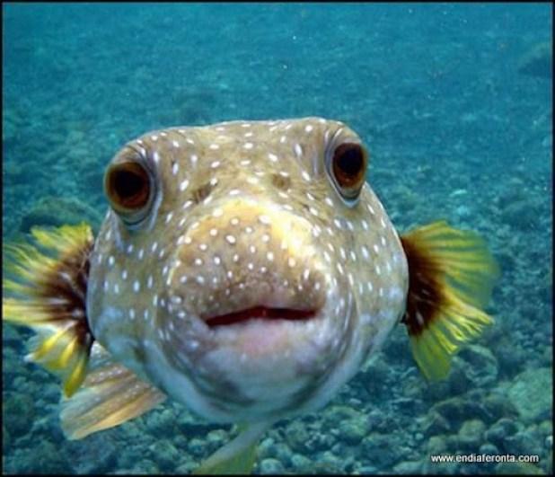 fish-faces17.jpg