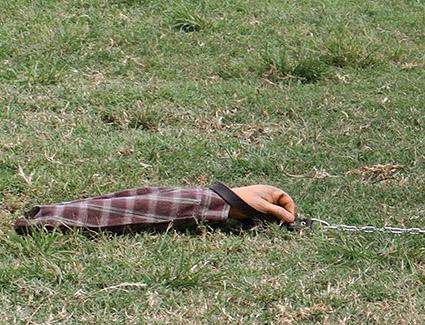 7728896f48d2a A estratégia foi colocar um braço de mentira na corda da coleira do cão com  a mensagem estampada na roupa do mesmo e soltar junto com o cachorros de  porte ...