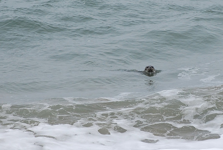 Check out this Harbor Seal that stalked us!