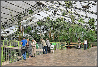 Orchids garden - Utopia