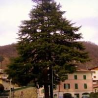 La leggenda dei cedri del Libano