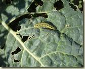 caterpillar's last meal_1_1