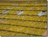 lichened roof_2_1