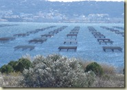 oyster beds_1