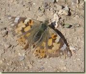 moth crop_1