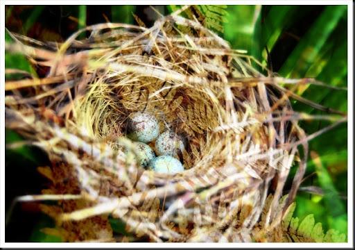 BIRD Nest and Ferns