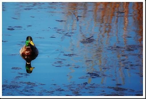 duck mud lake