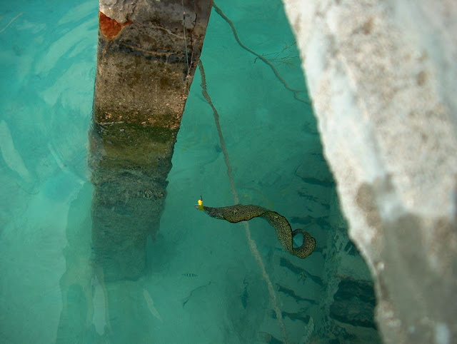 (Murray) eel fishing.
