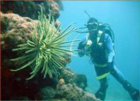scuba diving, carmen, agusan del norte