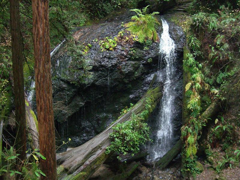 Waterfall in lush setting