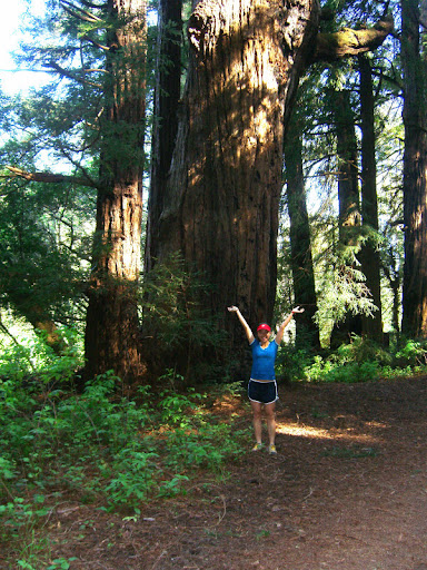 Serena and a large redwood