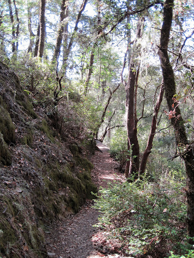 Narrow and technical single track on the Canyon Trail
