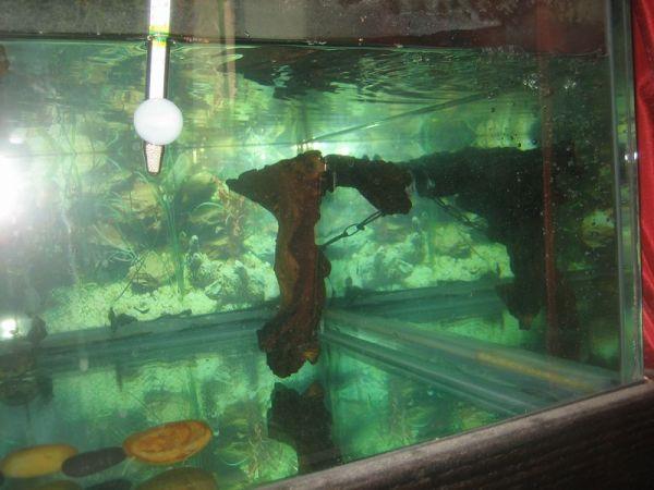 underwater turtle basking platform in aquarium