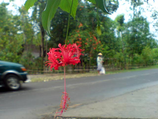 Bunga Ditepi Jalan