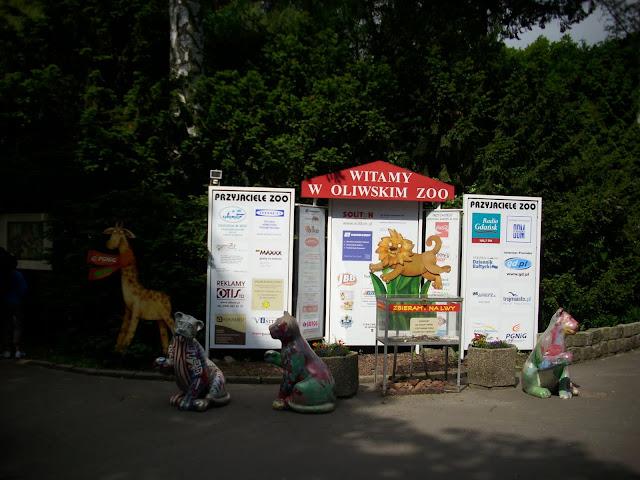 Witamy w oliwskim zoo! Lwy jakie są - każdy widzi!