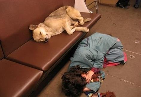 Perro en Metro Moscu3