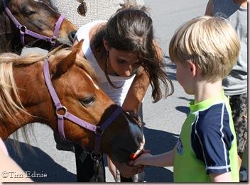 j feeding pony