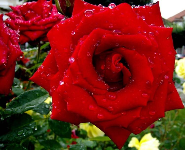 Resultado de imagem para flores lindas