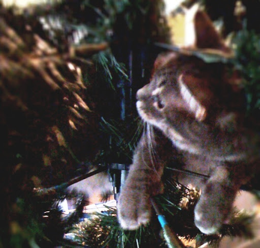 Kitty in Christmas tree