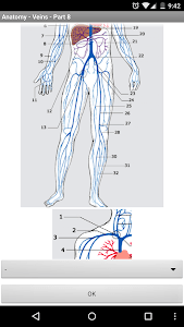 Anatomy - Veins screenshot 2