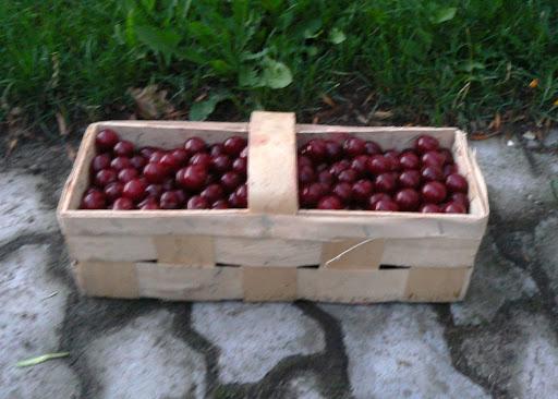Taka łubianka wiśni kosztuje w skupie od 2,1 do 2,7 zł