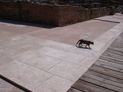 Cat in Thessaloniki