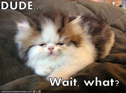 DUDE... Wait, what? - LOLcats from IcanHasCheezburger.com