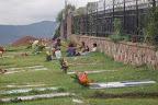Jovenes que trabajan limpiando tumbas en el cementerio el d�a de los difuntos
