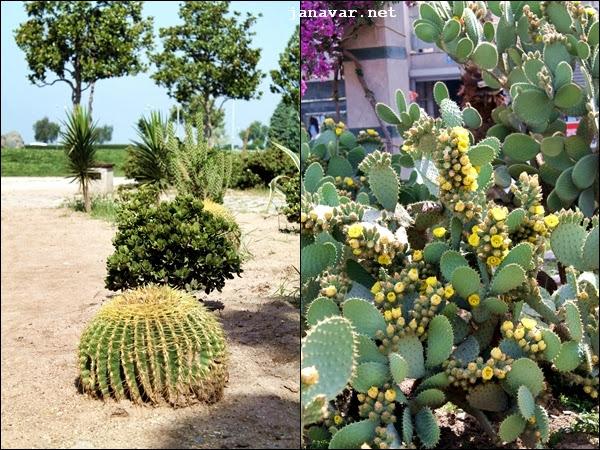 Turkey Tuesday: Kaktuspark in Izmir
