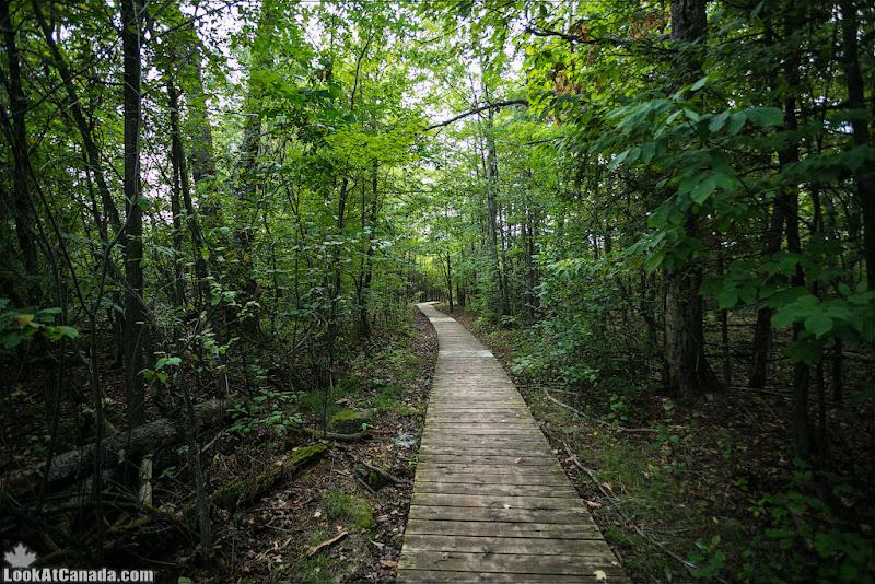 LookAtCanada.com / Дождливые леса Оттавы и канадская радуга