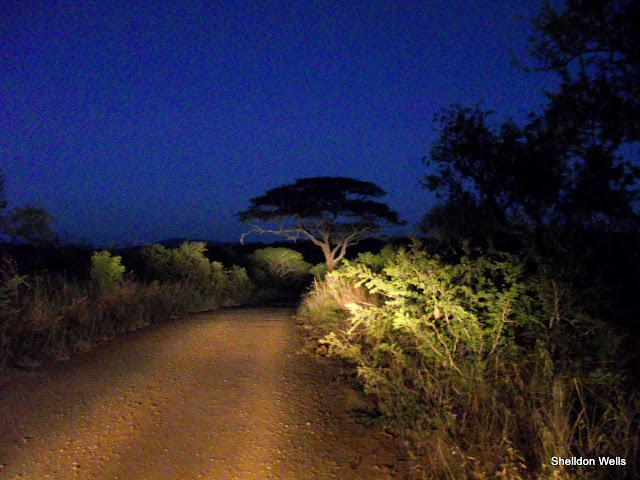 Game viewing in the dark