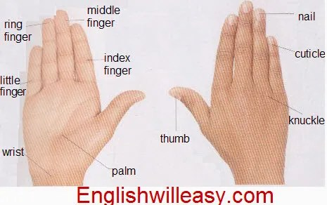 Human Body Parts Pictures with Names - Body Parts Vocabulary: Leg ...