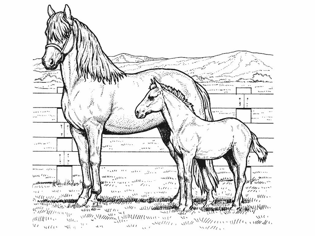 Horse Coloring Pages To Print For Free