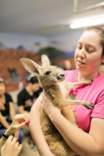 Baby Kangaroos.