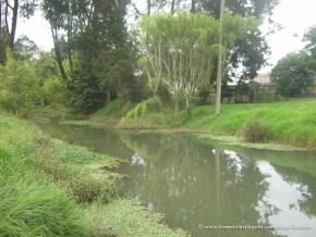 Hilo de agua, Humedal del San Viator