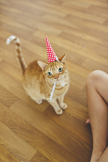 Happy Birthday Cats | A Cat in a Hat.