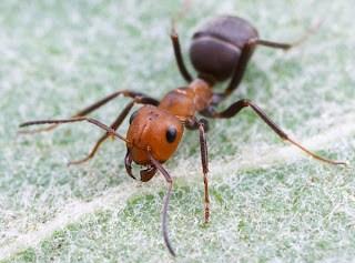 μυρμήγκια