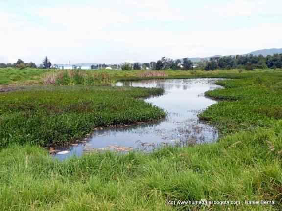 Humedal El Cortijo