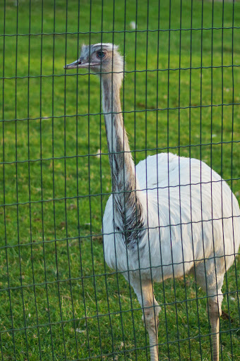 dierentuin Marc Sioen