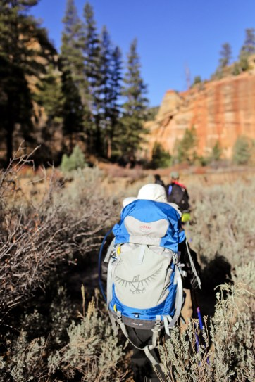 Day 1 of the Narrows Hike Zion National Park.