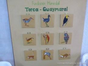 Pedagogía aves, Torca Guaymaral