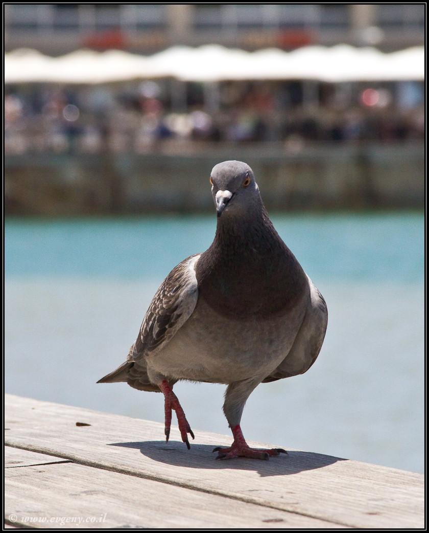 И еще один птах