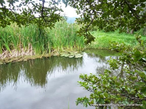 Vista de los nenufares en el humedal Santa María del Lago